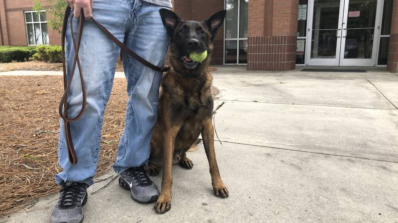 Nero is a 10-year-old Malinois that is trained in drug apprehension and also tracking scents.