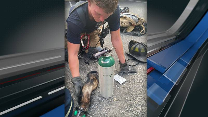 Authorities say one person, along with three dogs and several other pets were rescued from an...