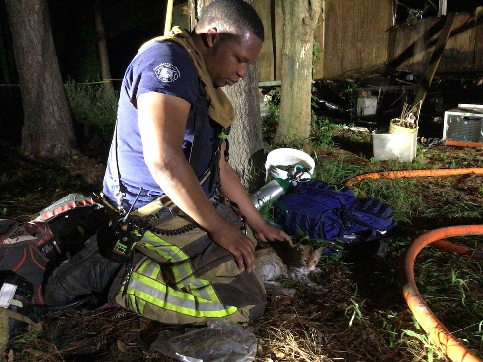 Crews say they found and removed a kitten from the home.