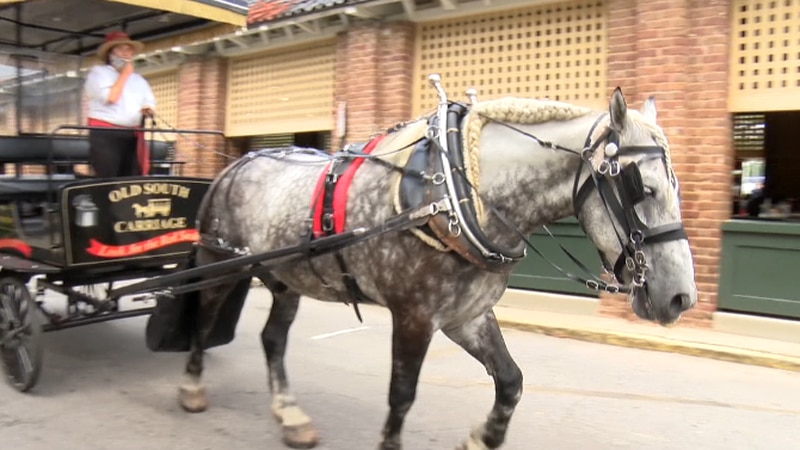Proposed changes to the City of Charleston's carriage horse laws are heading to city council...