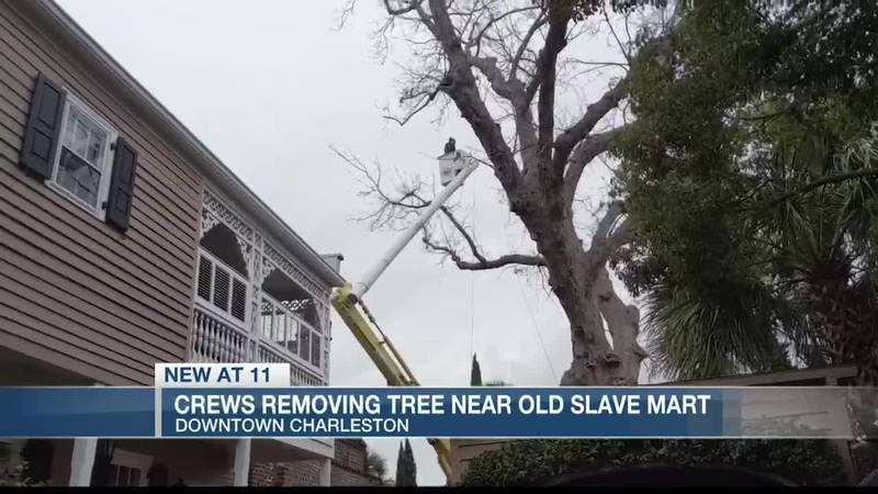 The throaty hum of chainsaws signaled the impending doom of a sickly pecan tree on Chalmers...