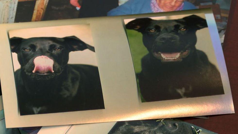 Judith Von treasures photos of her beloved pet, Zane. (Source: Live 5)
