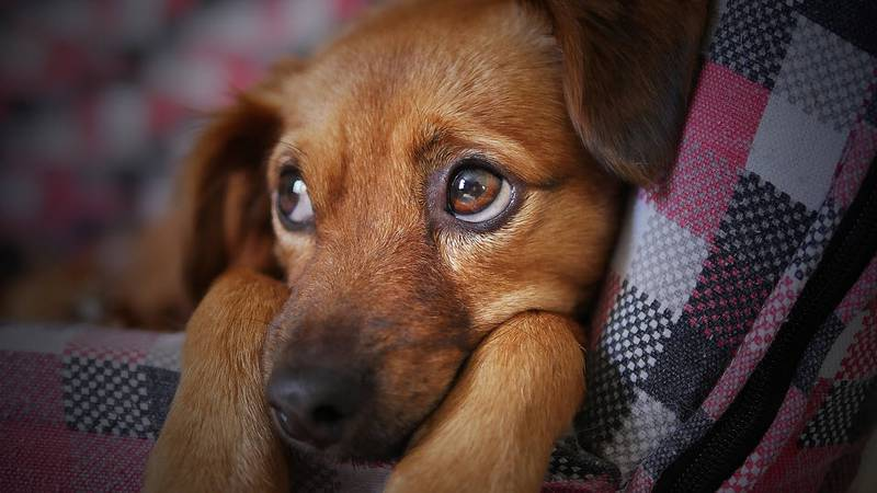 In the days following Independence Day, the Charleston Animal Society is making it easier for...