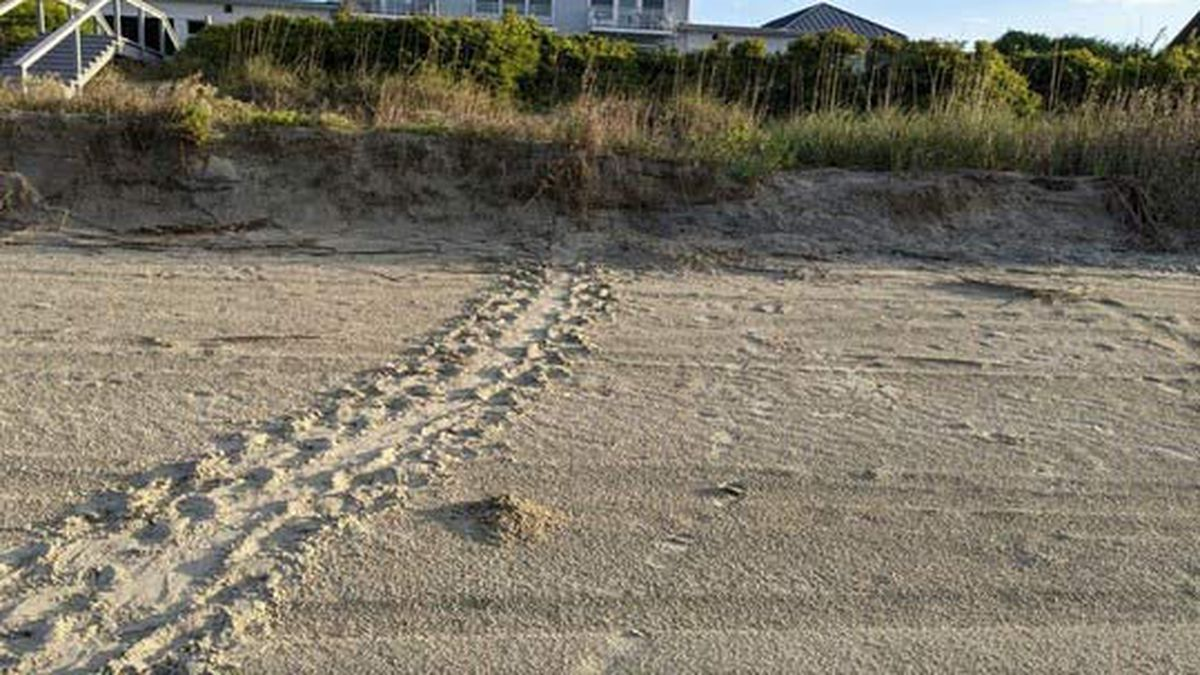 Volunteers for the South Carolina Department of Natural Resources spotted signs of the first...
