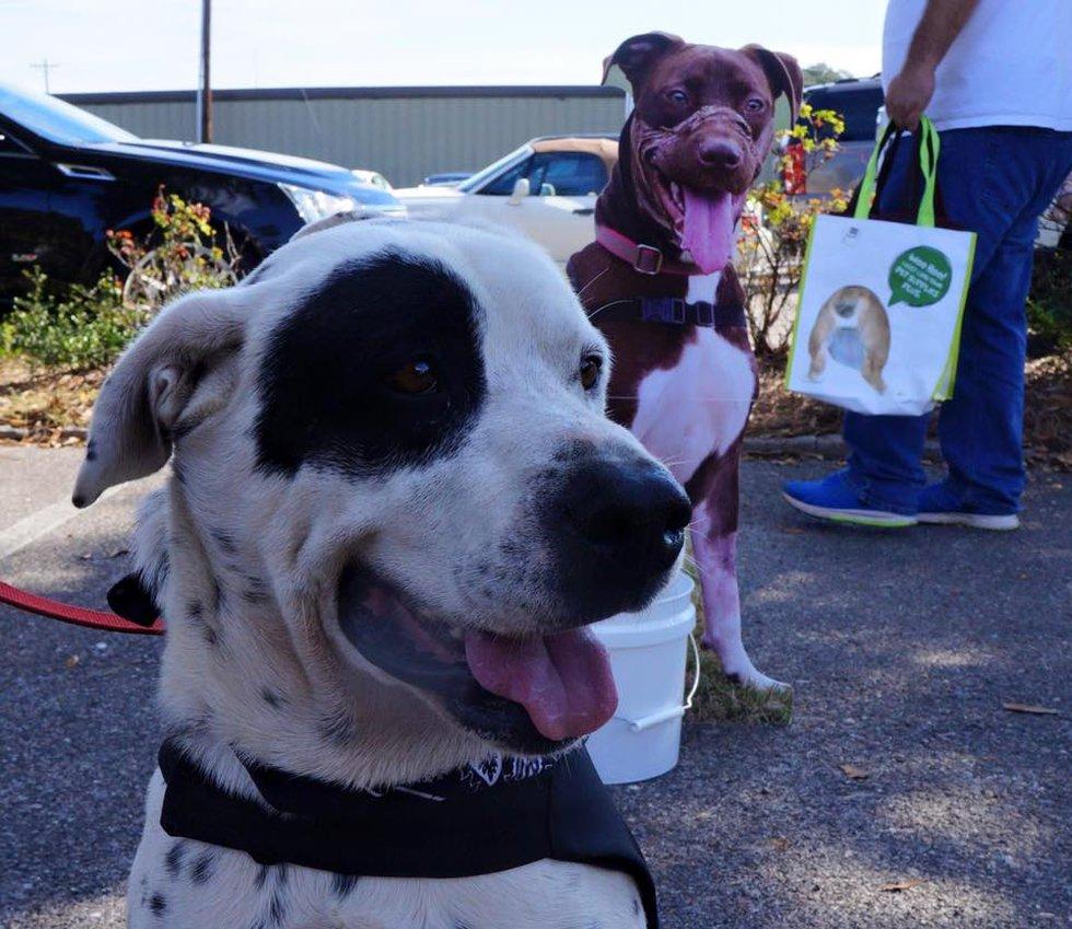 (Photo Source: Charleston Animal Society)