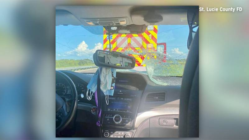 A flying turtle shattered a windshield on Florida's Turnpike on Friday.