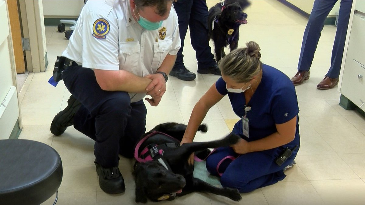 Scarlett, a 1-year-old black lab, and Darby, a 3-year-old Australian Shepherd mix, paid a visit...