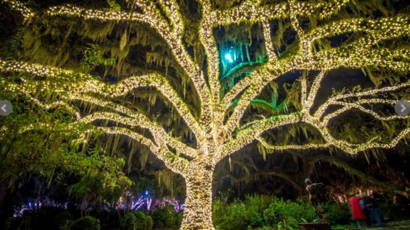The magic of Christmas is alive and will take your breath away as you take a walk through the...