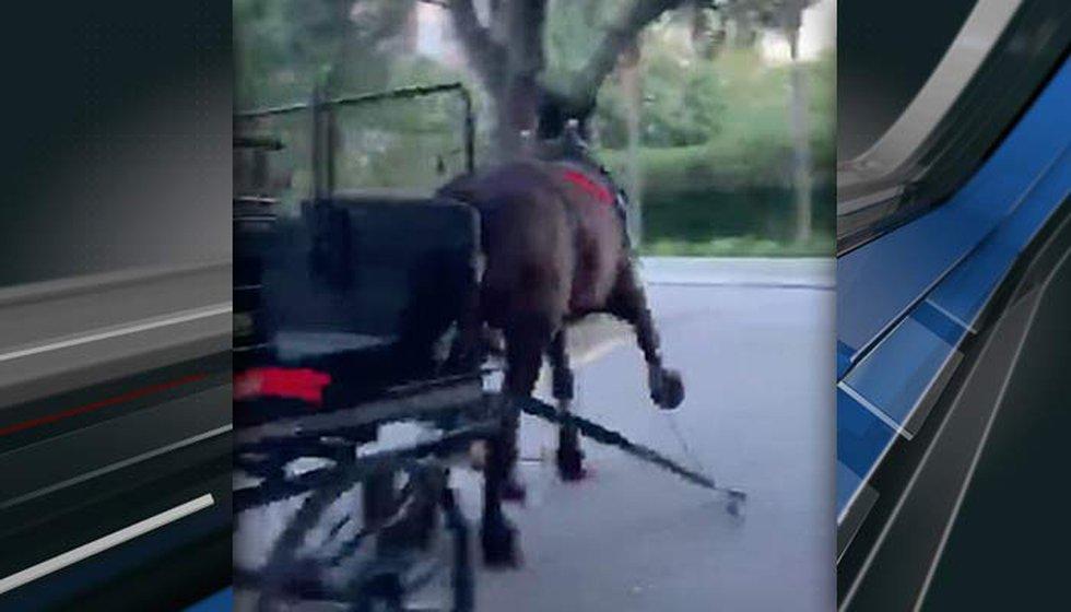 Charleston Animal Society officials said the video was captured on Sunday night on Anson Street.
