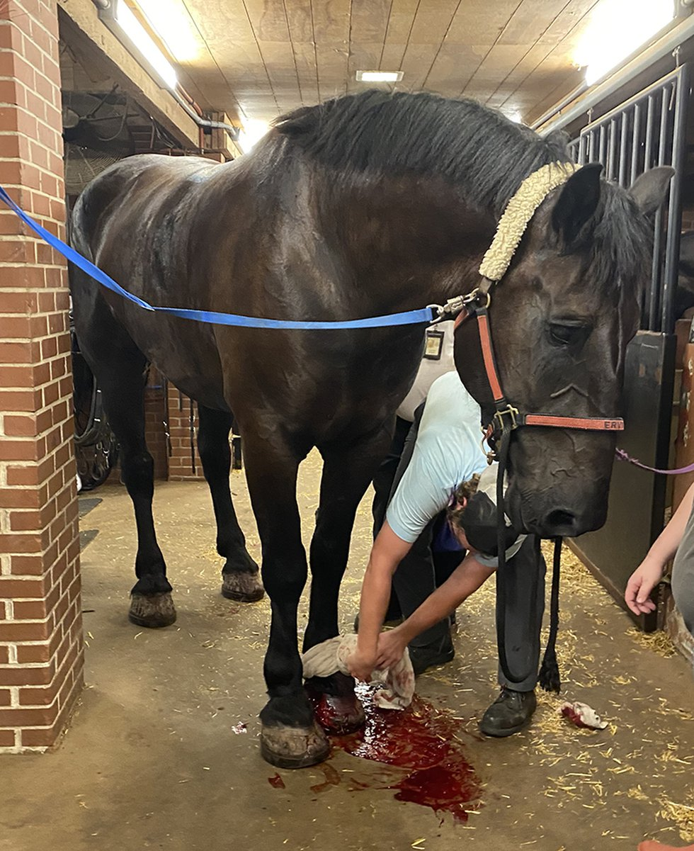 A picture appears to show that the horse suffered a leg injury in the incident.