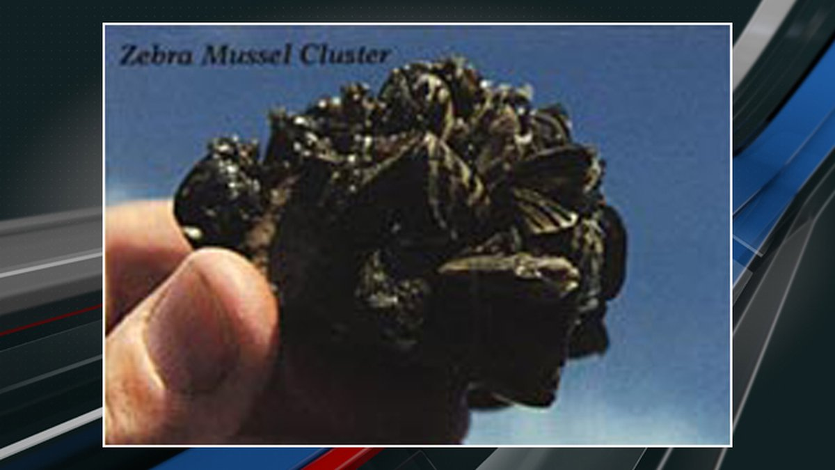 Officials with the South Carolina Department of Natural Resources have confirmed that invasive...
