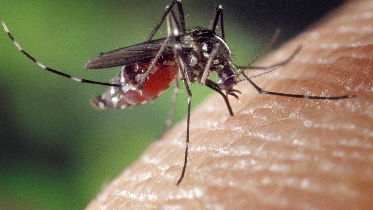 The county wants to educate its citizens about mosquitos. Source: Pixabay