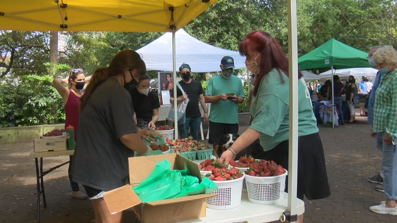 Saturday marks the start of the Charleston Farmers Market in Marion Square for the first time...