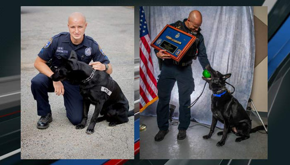 Charleston Police K-9 handler Sgt. Jeffrey Thom paid tribute to Orrie, who was laid to rest...