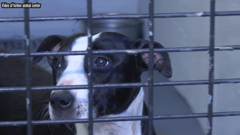 Berkeley County spokesperson Hannah Moldenhauer says an expansion will allow the animal center...