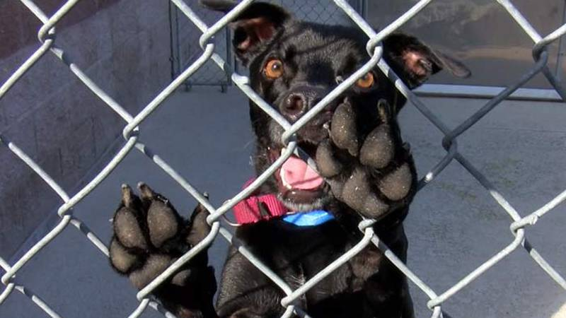 The Charleston Animal Society says it has more than triple the number of dogs and cats is can...