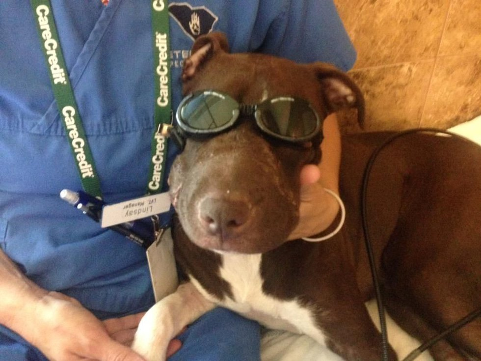 Caitlyn wearing protective googles on Tuesday as she went laser treatment around her mount....